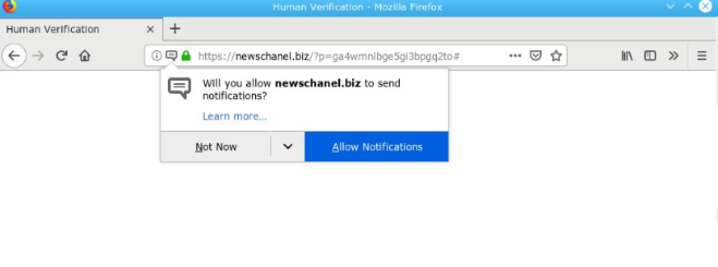 How to remove Newschanel.biz ads