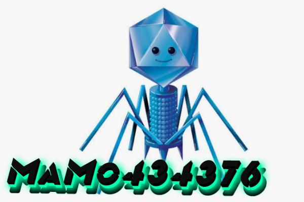 how to remove MaMo434376